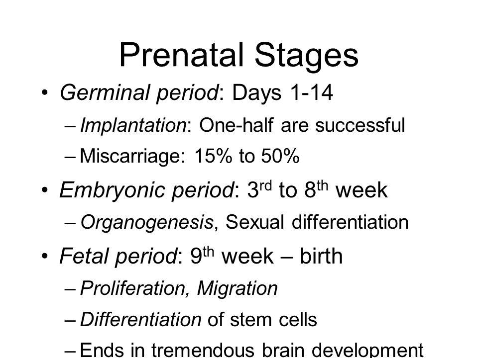 Prenatal Stages Germinal period: Days 1-14