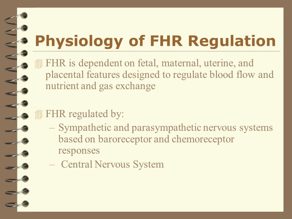 Physiology of FHR Regulation