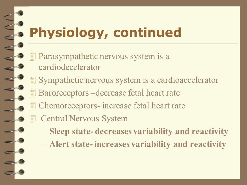 Physiology, continued Parasympathetic nervous system is a cardiodecelerator. Sympathetic nervous system is a cardioaccelerator.