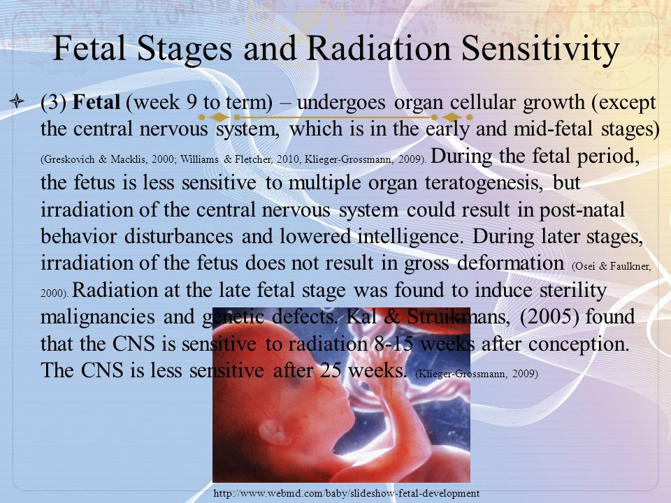 Fetal Stages and Radiation Sensitivity