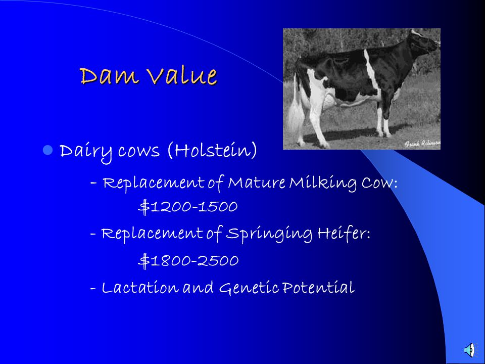 Dam Value Dairy cows (Holstein)