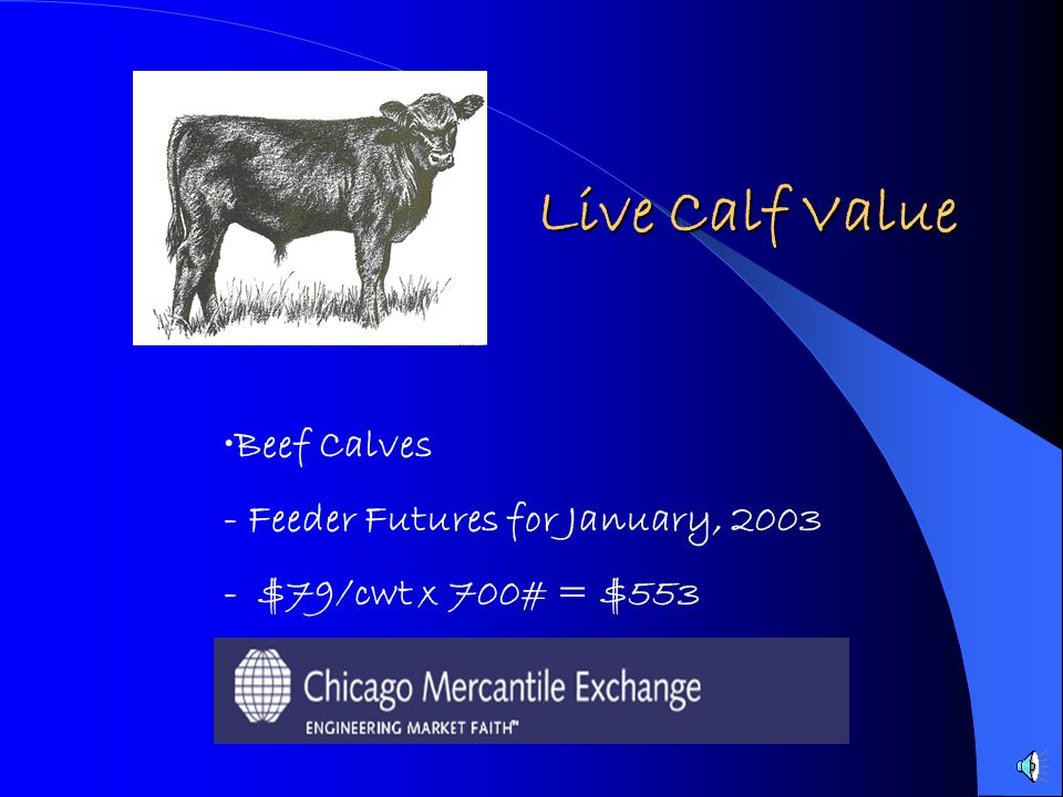 Live Calf Value Beef Calves - Feeder Futures for January, 2003
