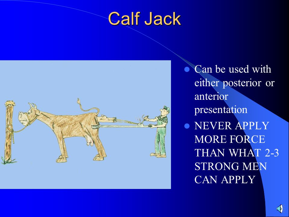 Calf Jack Can be used with either posterior or anterior presentation