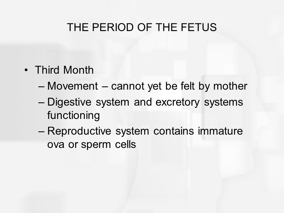 THE PERIOD OF THE FETUS Third Month. Movement – cannot yet be felt by mother. Digestive system and excretory systems functioning.