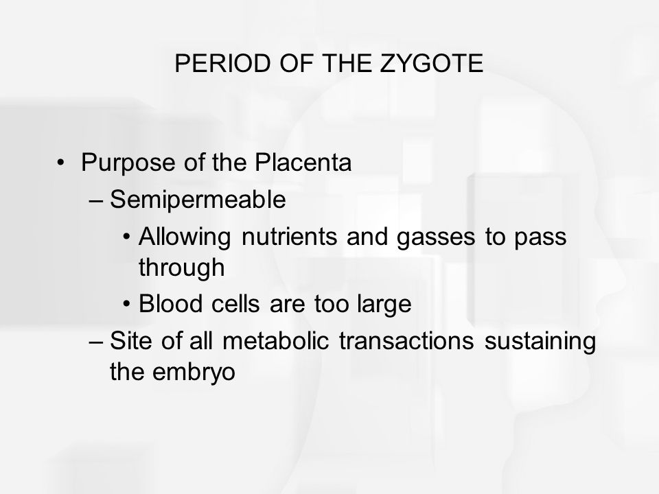 PERIOD OF THE ZYGOTE Purpose of the Placenta. Semipermeable. Allowing nutrients and gasses to pass through.
