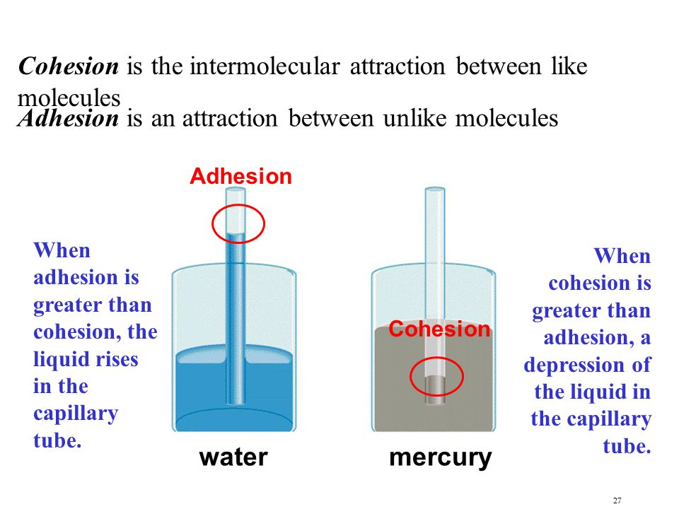 Cohesion is the intermolecular attraction between like molecules