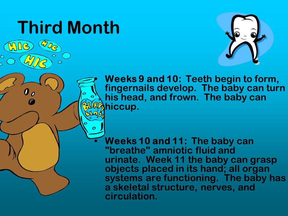 Third Month Weeks 9 and 10: Teeth begin to form, fingernails develop. The baby can turn his head, and frown. The baby can hiccup.
