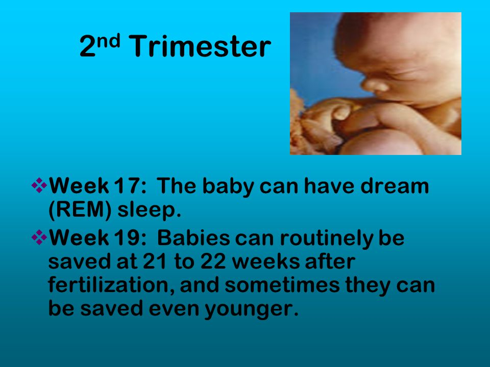 2nd Trimester Week 17: The baby can have dream (REM) sleep.