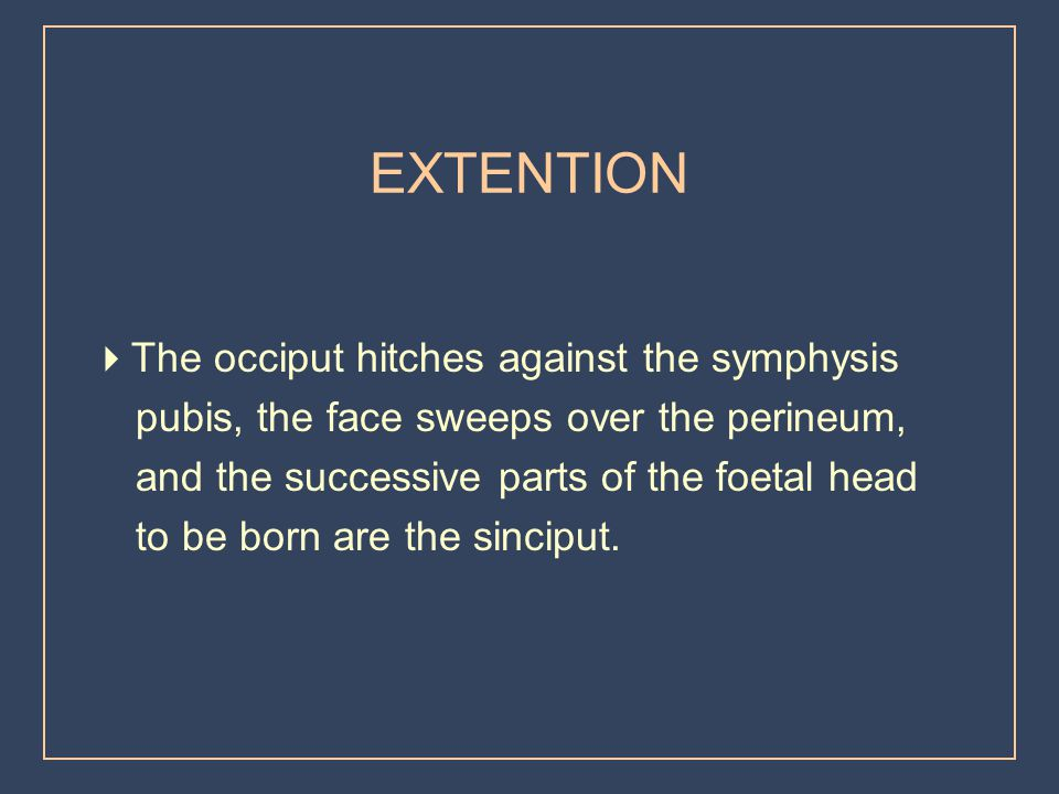EXTENTION The occiput hitches against the symphysis