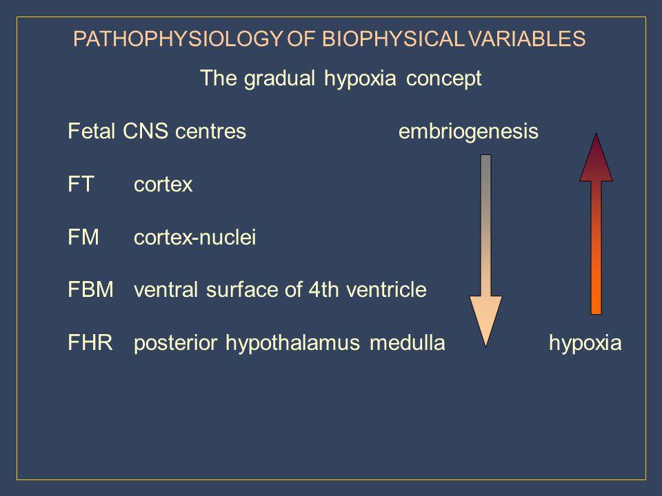 The gradual hypoxia concept Fetal CNS centres embriogenesis FT cortex
