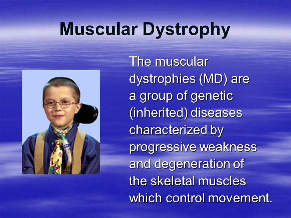 Muscular Dystrophy The muscular dystrophies (MD) are