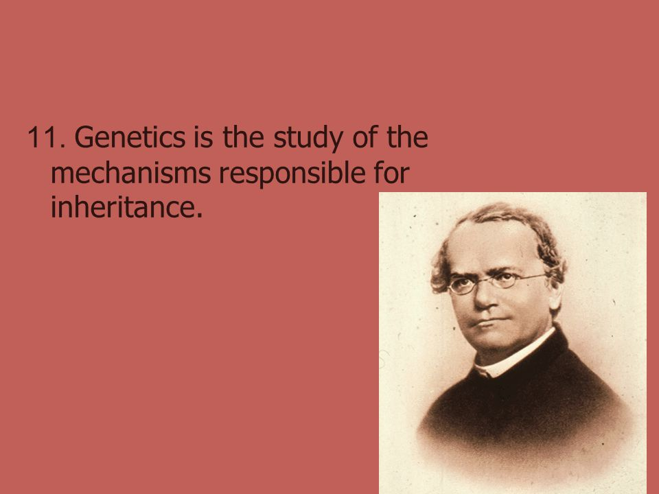 11. Genetics is the study of the mechanisms responsible for inheritance.