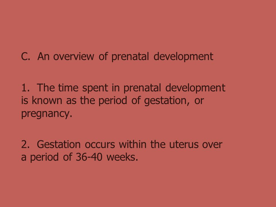 C. An overview of prenatal development