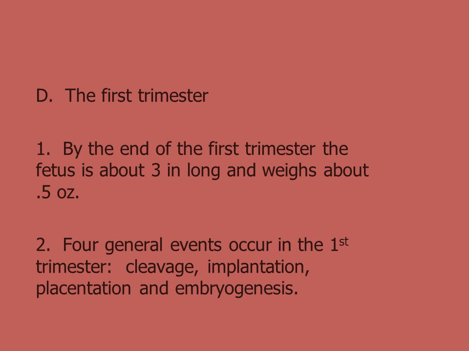 D. The first trimester 1. By the end of the first trimester the fetus is about 3 in long and weighs about .5 oz.