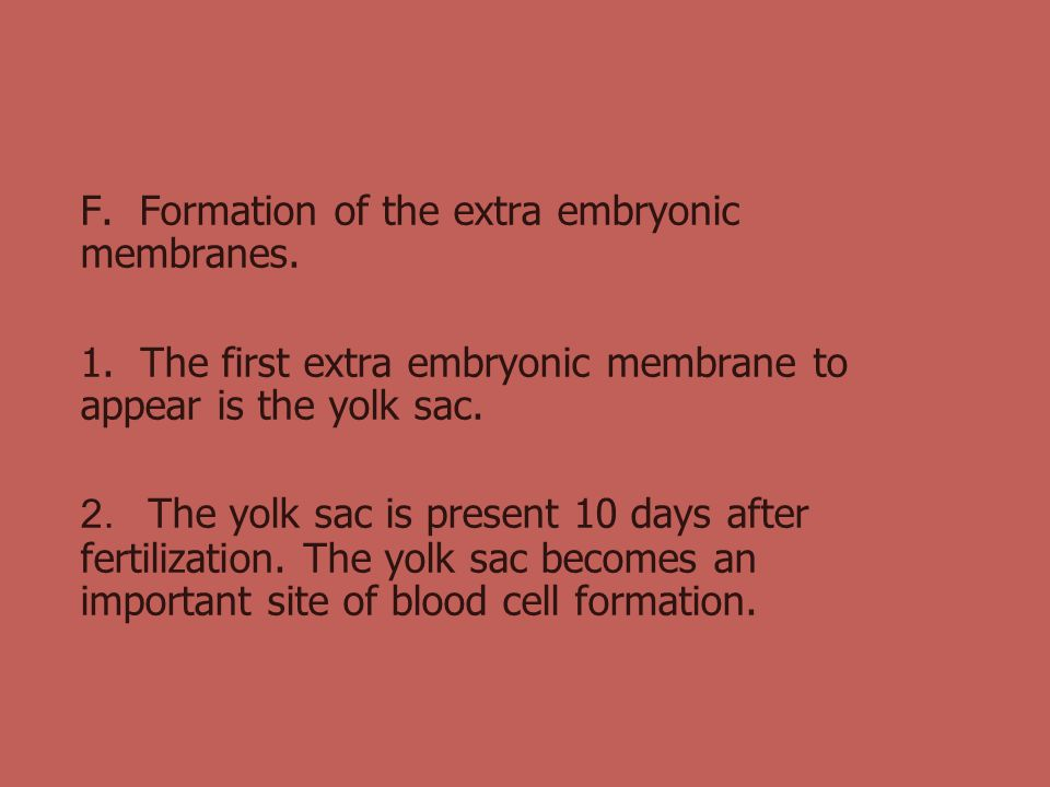 F. Formation of the extra embryonic membranes.