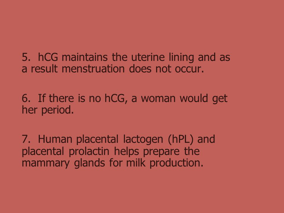 5. hCG maintains the uterine lining and as a result menstruation does not occur.