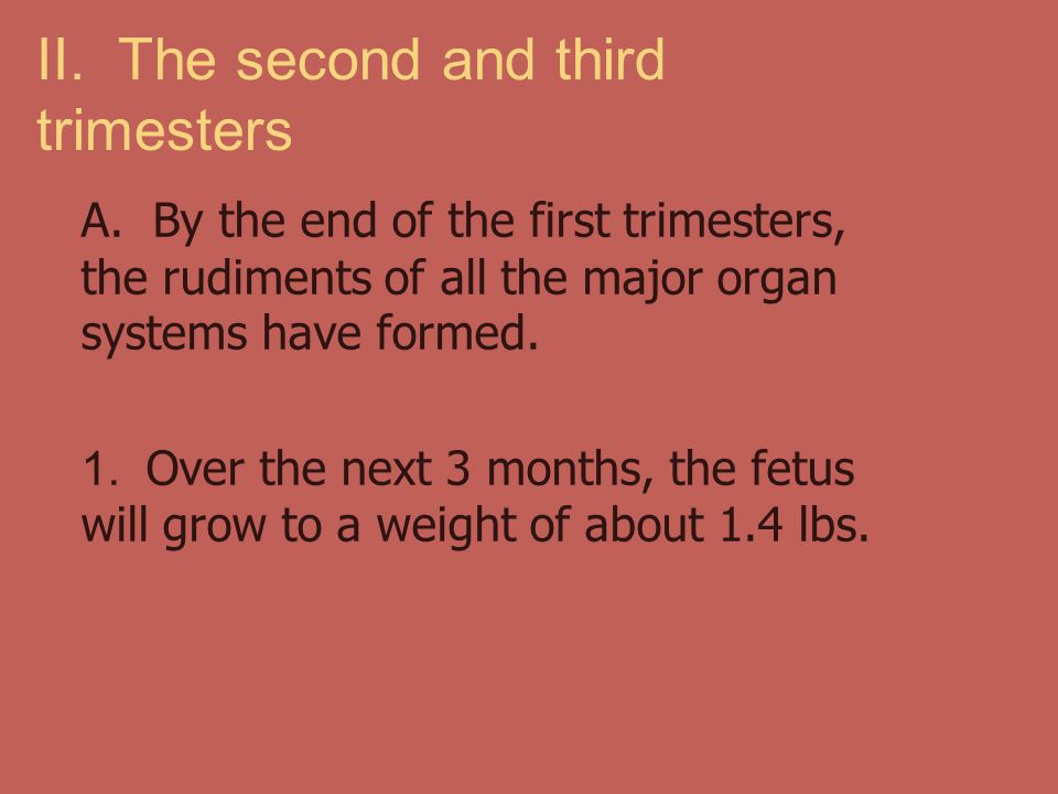 II. The second and third trimesters