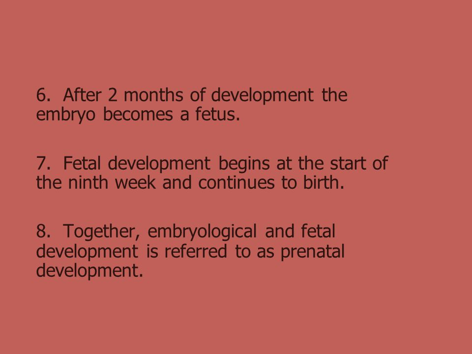 6. After 2 months of development the embryo becomes a fetus.