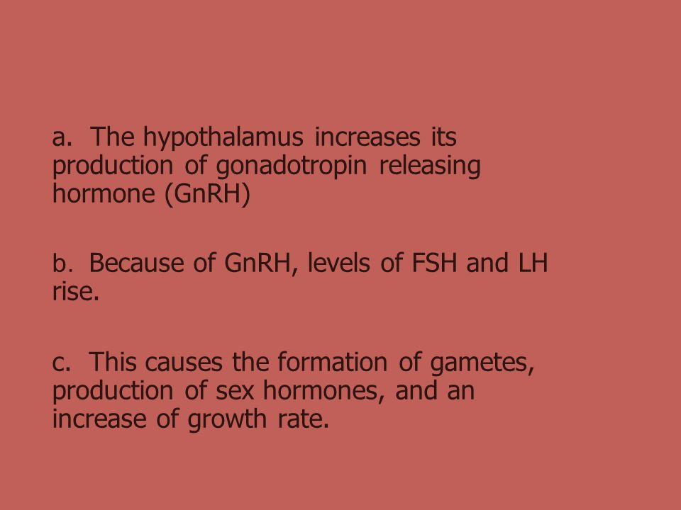 a. The hypothalamus increases its production of gonadotropin releasing hormone (GnRH)