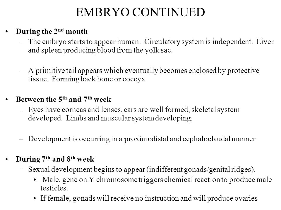 EMBRYO CONTINUED During the 2nd month