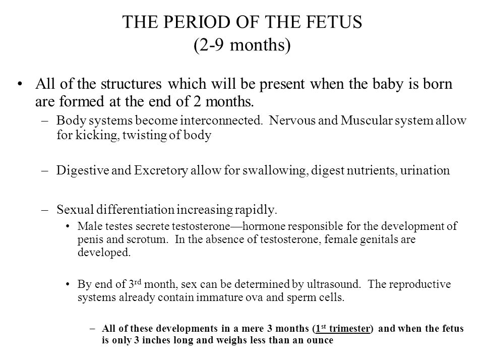THE PERIOD OF THE FETUS (2-9 months)