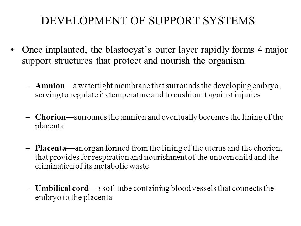DEVELOPMENT OF SUPPORT SYSTEMS