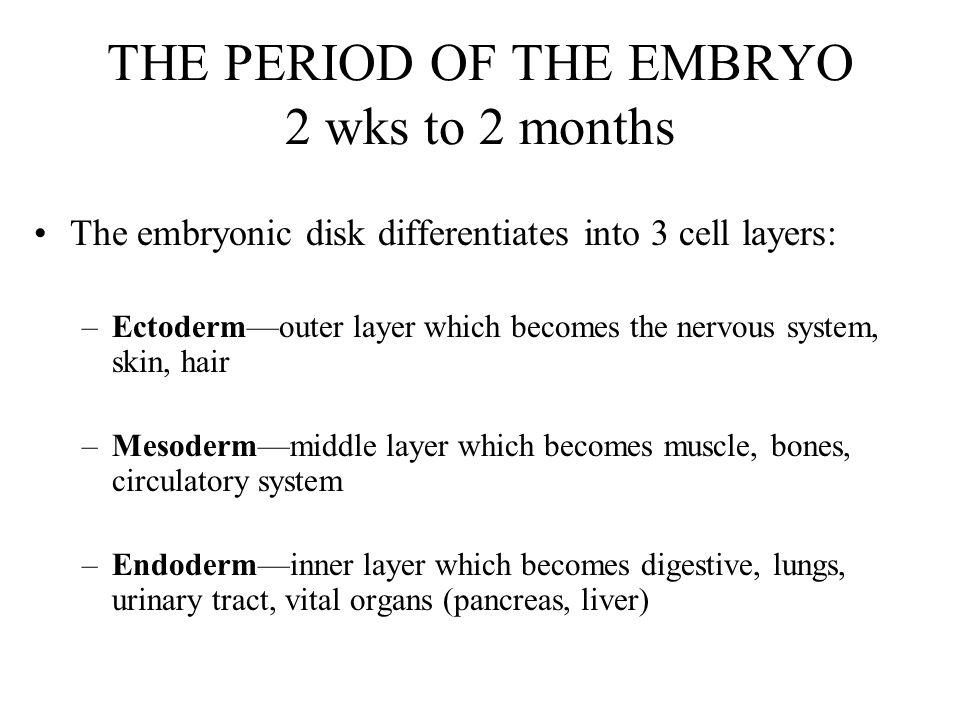 THE PERIOD OF THE EMBRYO 2 wks to 2 months