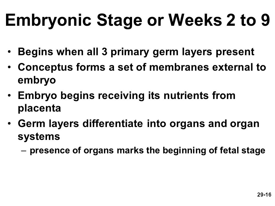 Embryonic Stage or Weeks 2 to 9