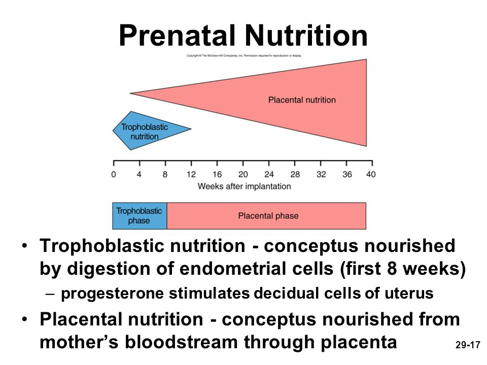 Prenatal Nutrition Trophoblastic nutrition - conceptus nourished by digestion of endometrial cells (first 8 weeks)