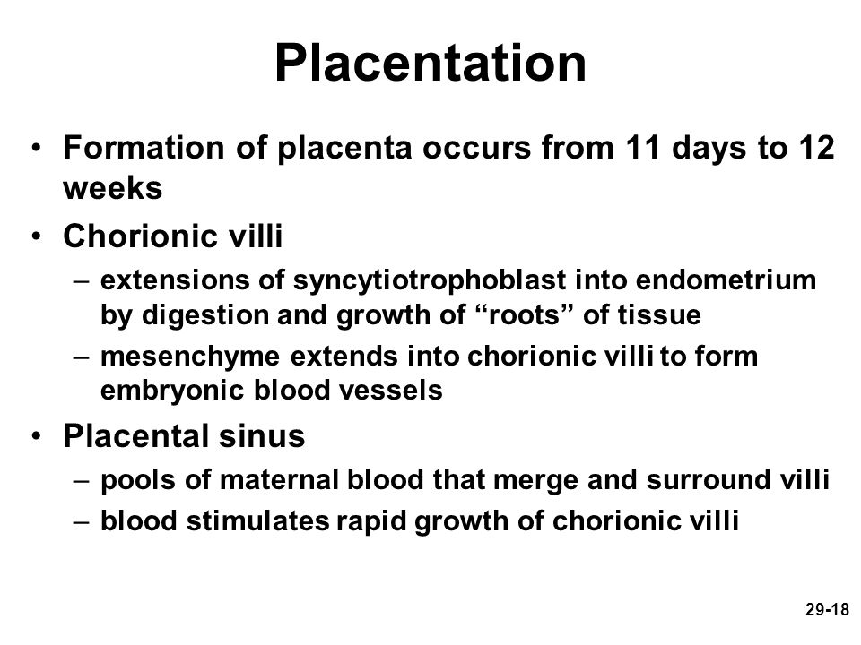 Placentation Formation of placenta occurs from 11 days to 12 weeks