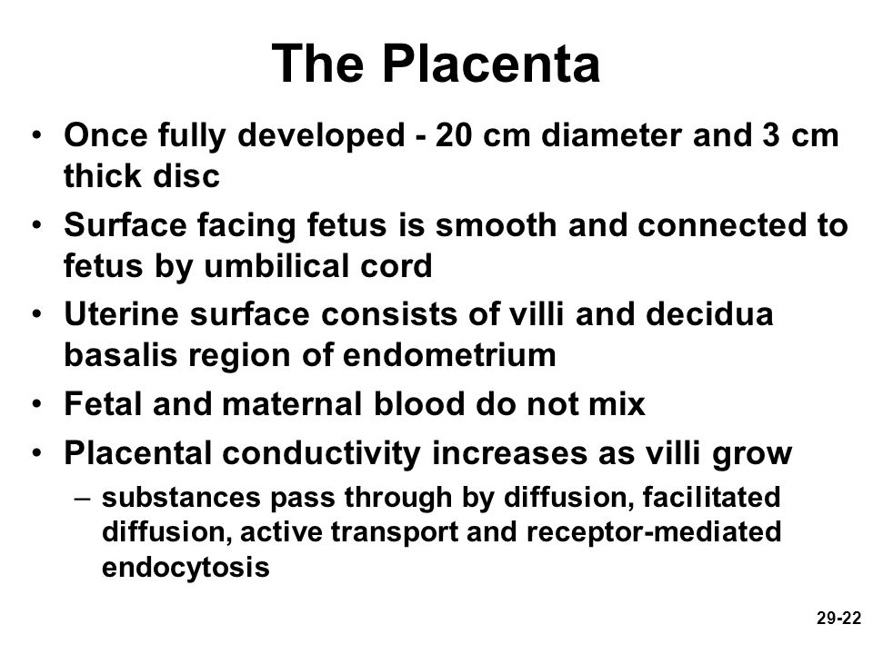 The Placenta Once fully developed - 20 cm diameter and 3 cm thick disc