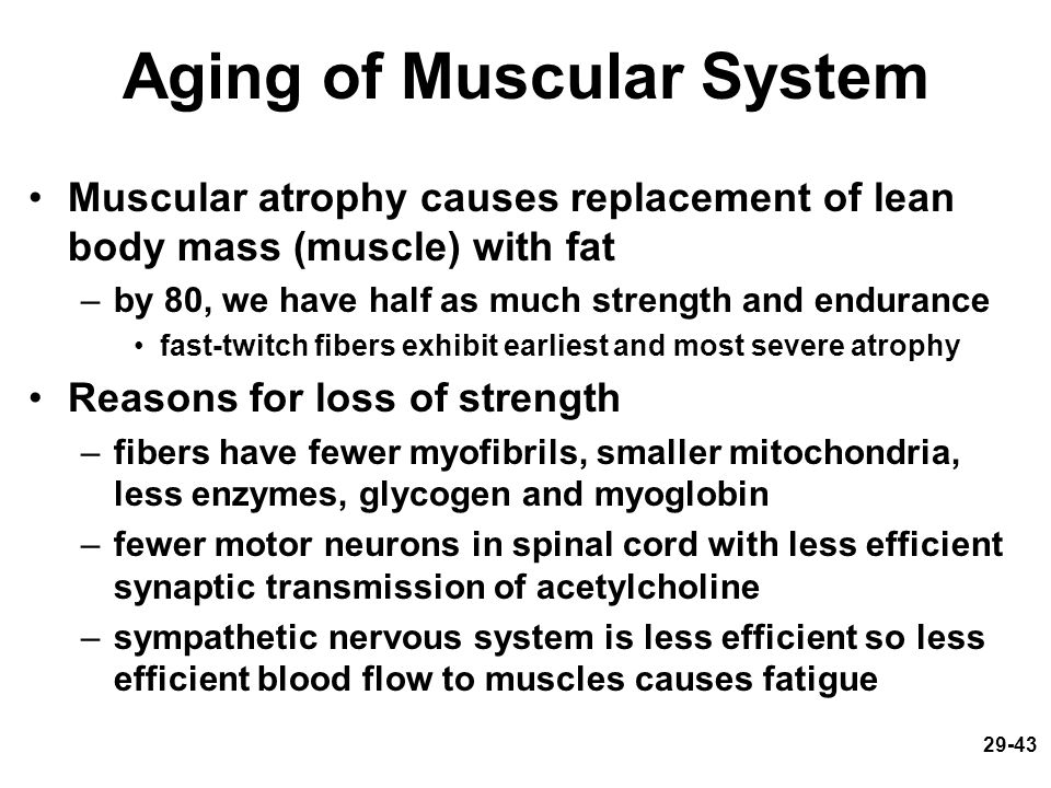 Aging of Muscular System