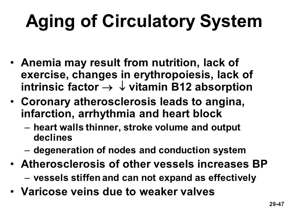 Aging of Circulatory System