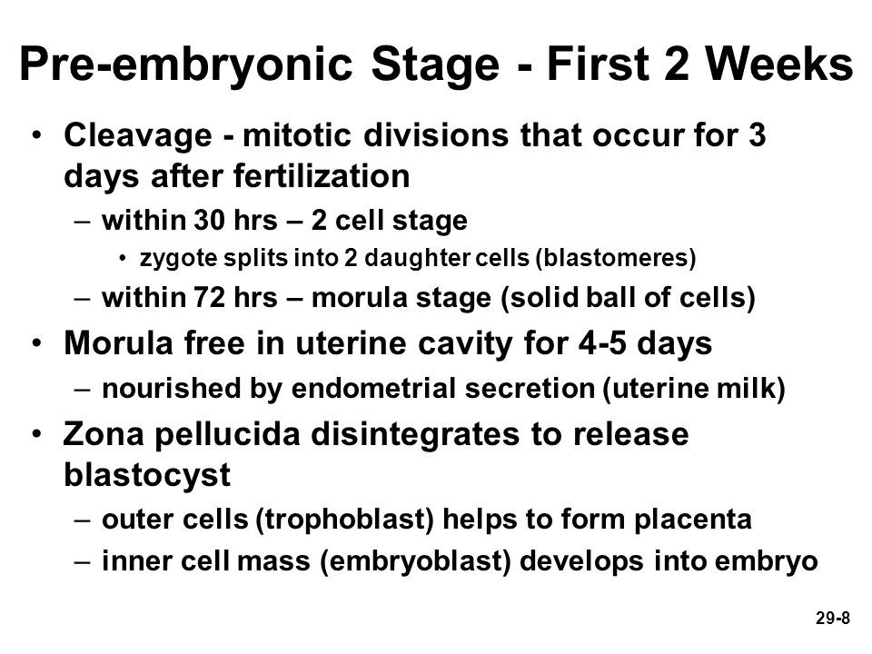 Pre-embryonic Stage - First 2 Weeks