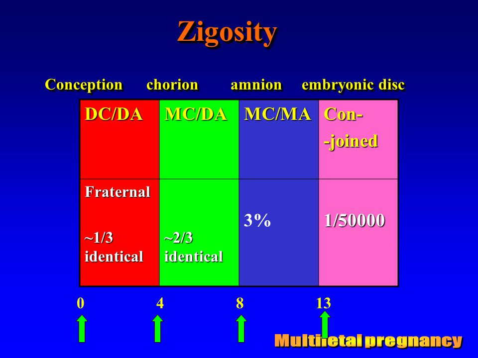 Zigosity Multifetal pregnancy DC/DA MC/DA MC/MA Con- -joined 3%