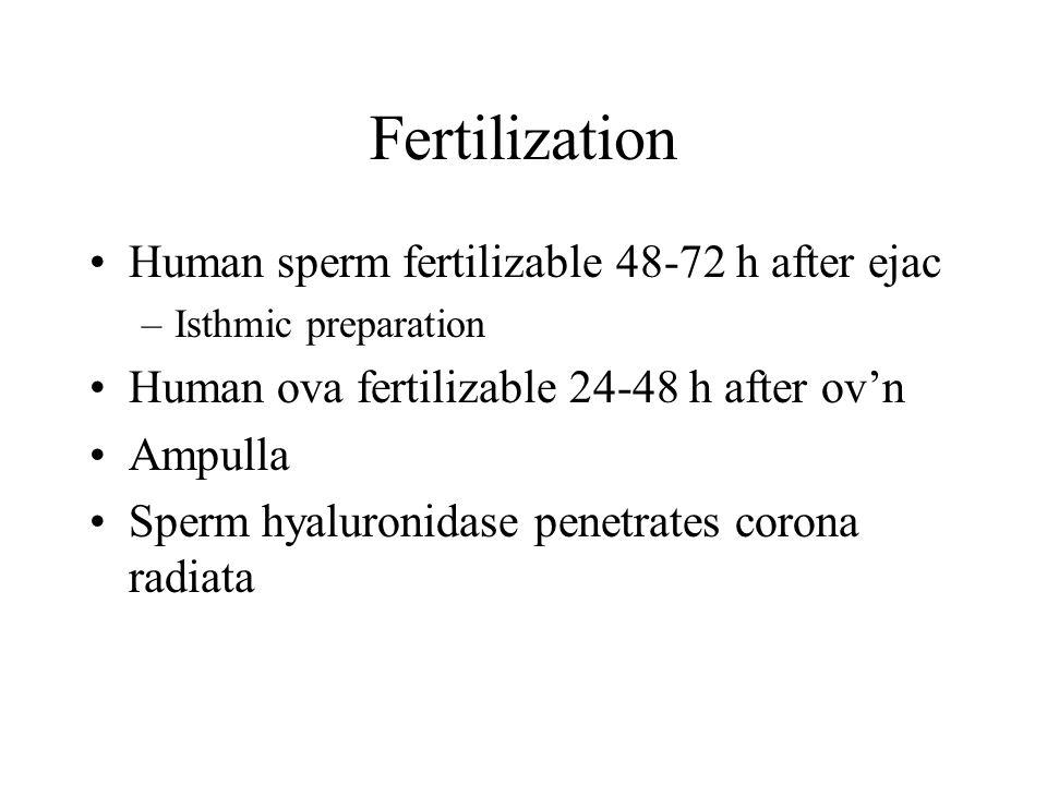 Fertilization Human sperm fertilizable 48-72 h after ejac