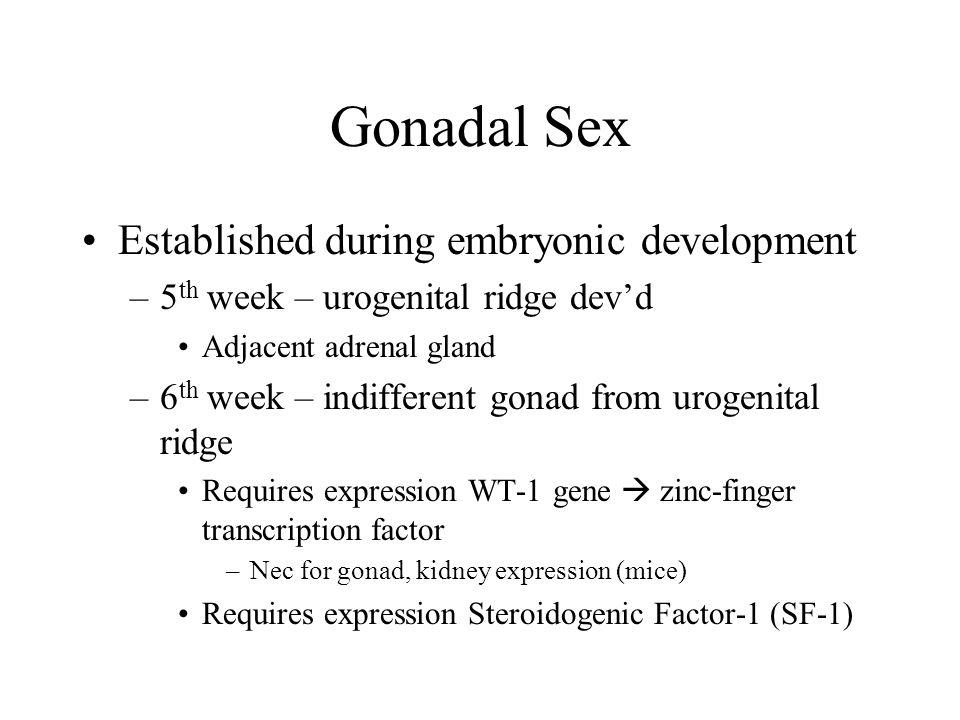 Gonadal Sex Established during embryonic development