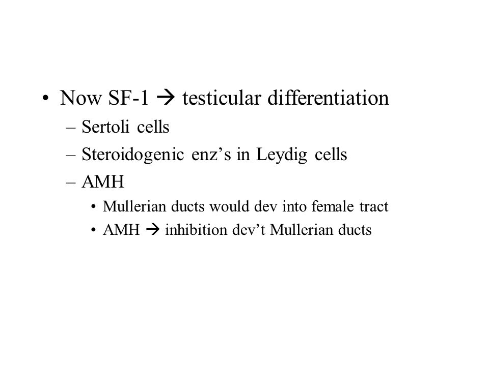 Now SF-1  testicular differentiation