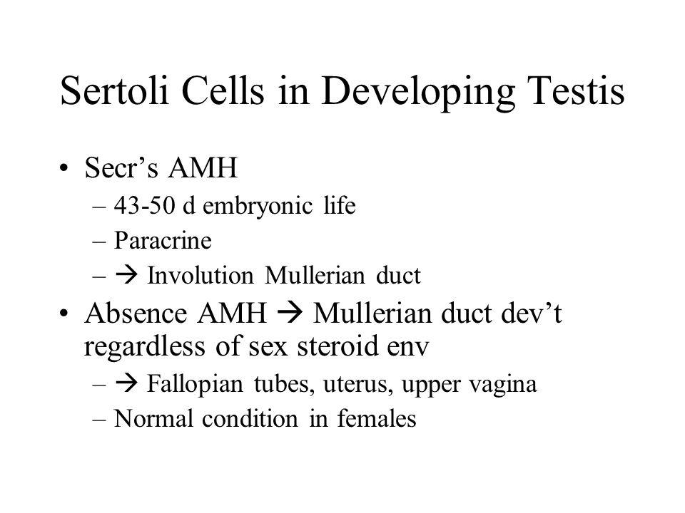 Sertoli Cells in Developing Testis