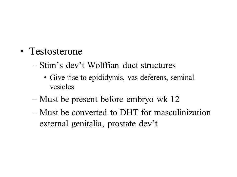 Testosterone Stim's dev't Wolffian duct structures