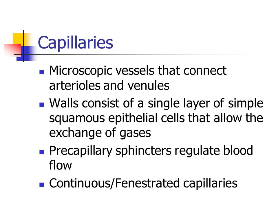 Capillaries Microscopic vessels that connect arterioles and venules