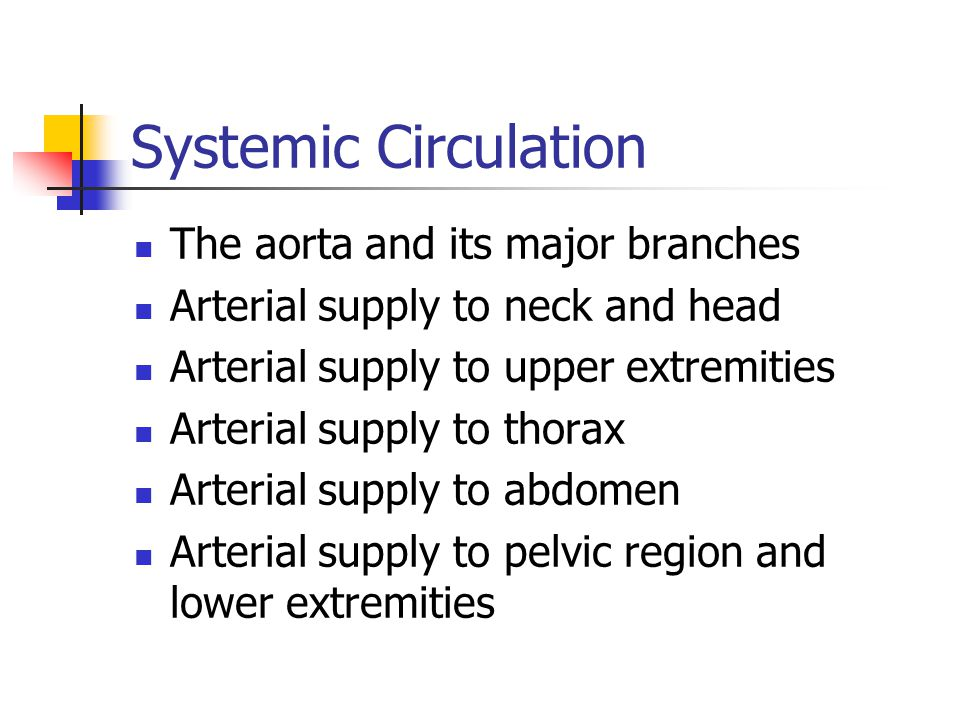 Systemic Circulation The aorta and its major branches