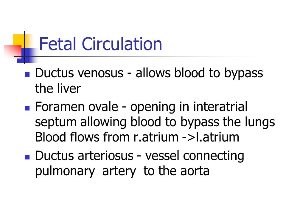 Fetal Circulation Ductus venosus - allows blood to bypass the liver