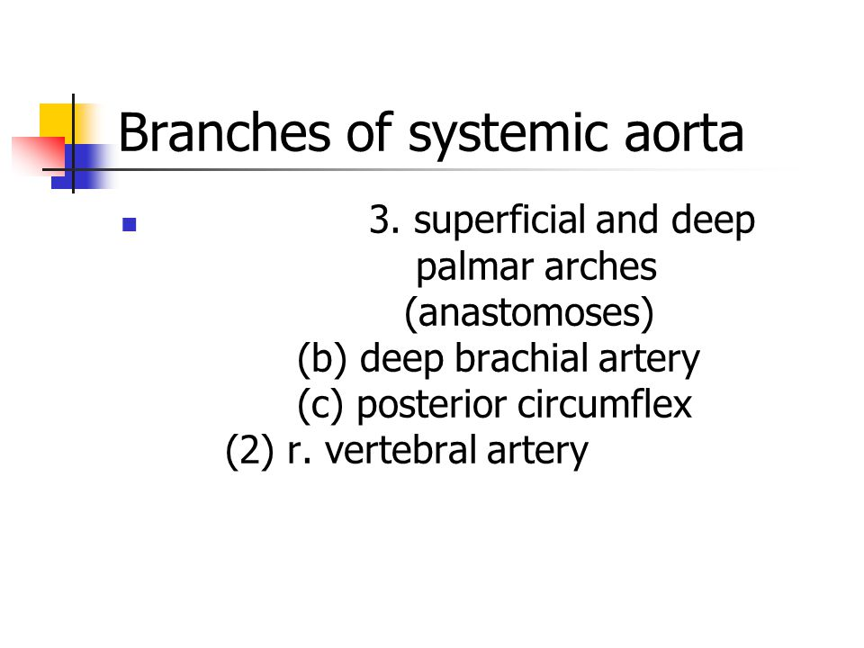Branches of systemic aorta