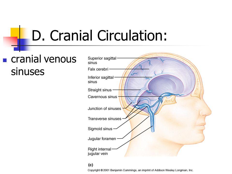 D. Cranial Circulation: