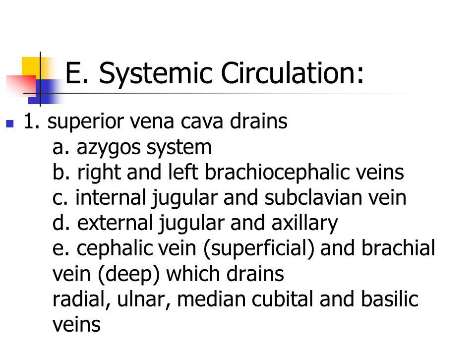 E. Systemic Circulation: