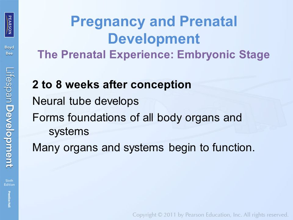 Pregnancy and Prenatal Development The Prenatal Experience: Embryonic Stage