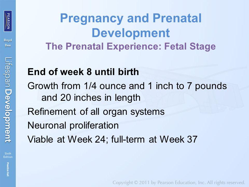 Pregnancy and Prenatal Development The Prenatal Experience: Fetal Stage