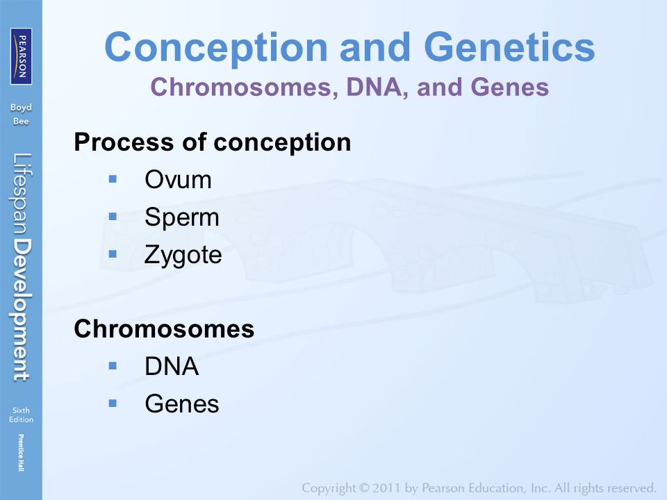Conception and Genetics Chromosomes, DNA, and Genes
