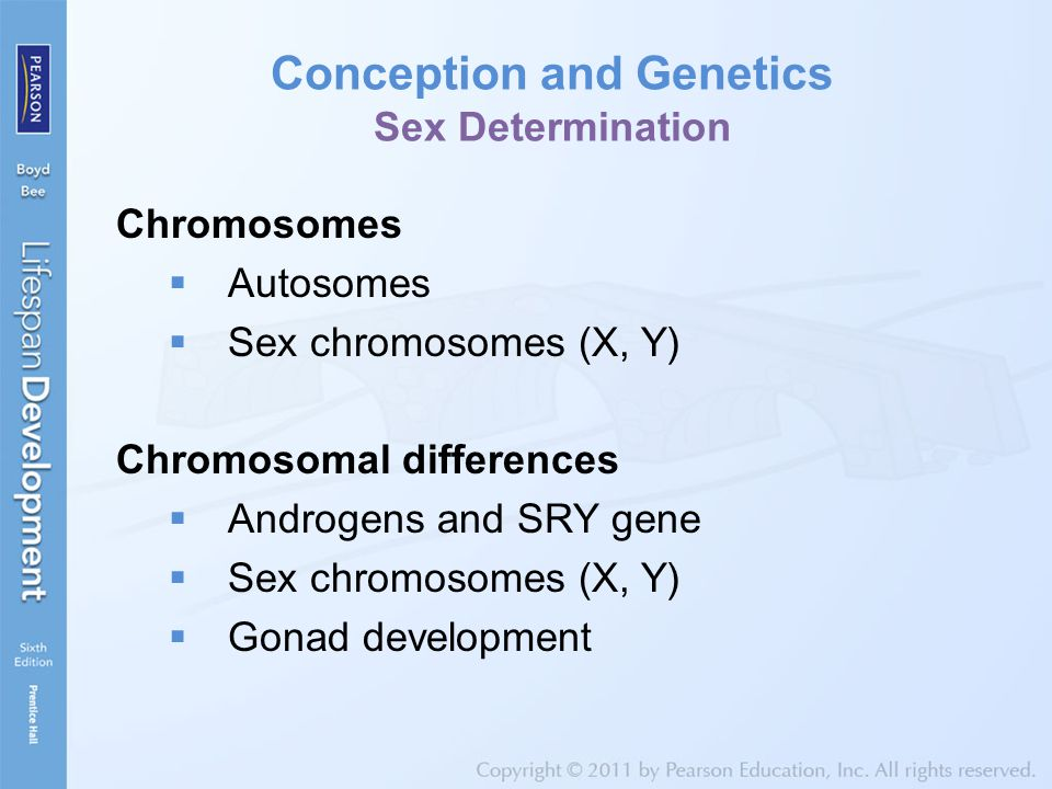 Conception and Genetics Sex Determination
